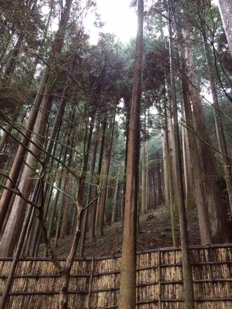 KyotoGinkakuji19