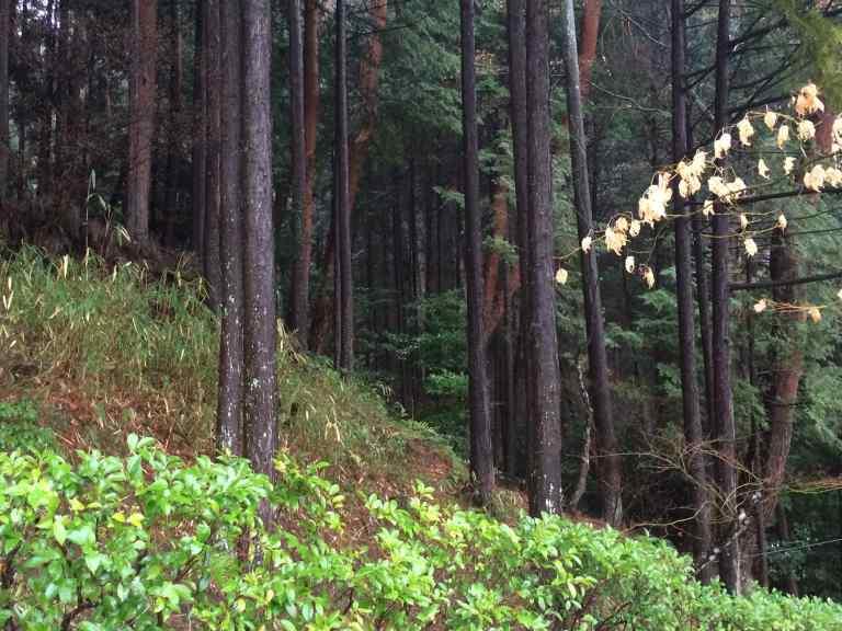 KyotoGinkakuji22